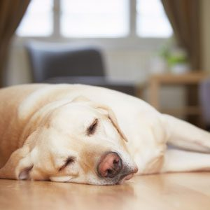Have a Pet? Keep Your HVAC system in Tip-Top Shape with these guidelines.